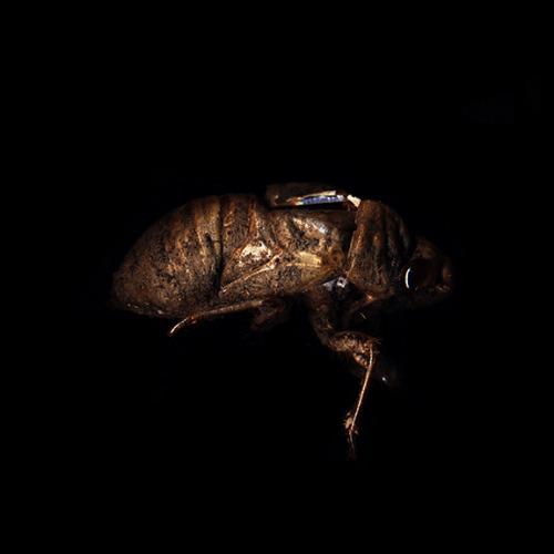 Scott Benesiinaabandan | cicada/sagas | c-print | 2013